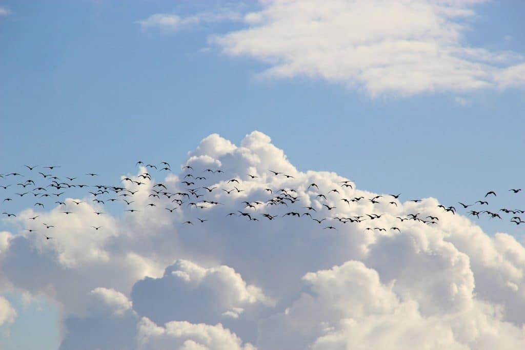 web migration